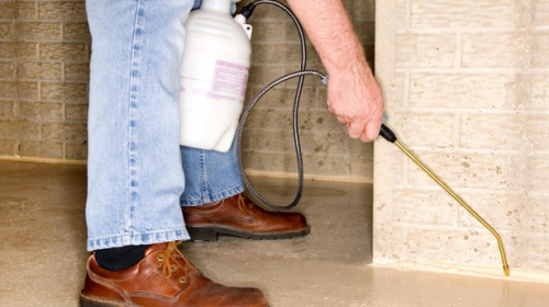 How to Protect Your Home from Pests During Renovation