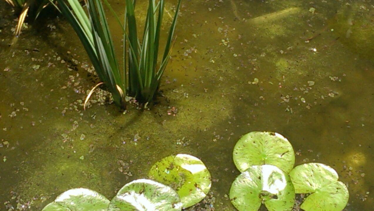 Image Credit - aquagardening.com.au