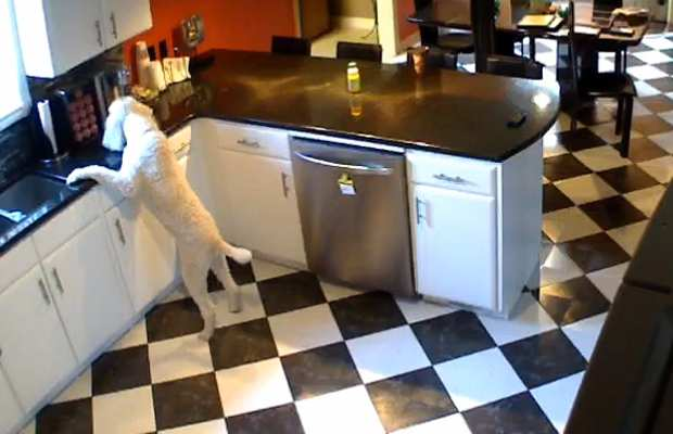 kitchen security