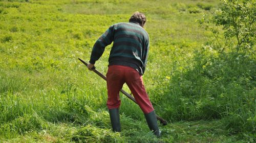 Home Gardening – How to Cut Grass like a Pro
